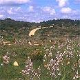 צילום דפנה מרוז, החברה להגנת הטבע