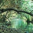 צילום: לביא ארצי, החברה להגנת הטבע