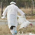 bird flu scare Photo: Reuters