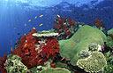 בעלי חיים מתחת לפני המים. צילום: ויז'ואל/פוטוס