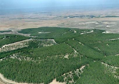 יער יתיר (באדיבות מועצה אזורית הר חברון  )