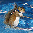 Squirrels: often multi-talented Photo: AP