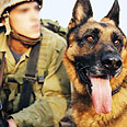 Attack dogs 'have proved their capabilities' (archives) Photo: Courtesy of IDF Spokesman