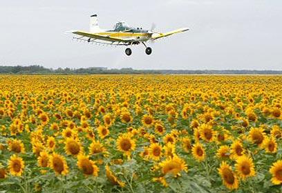 מטוס ריסוס (צילום: רויטרס)
