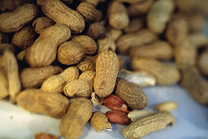 Peanuts. Instead of provoking an allergy, early exposure seemed to help build tolerance (Photo: Visual/Photos)