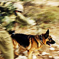 Canine in action Photo courtesy of the IDF