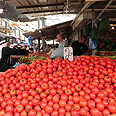 Tomato prices up 23.6% (archives) Photo: Ziv Reinstein