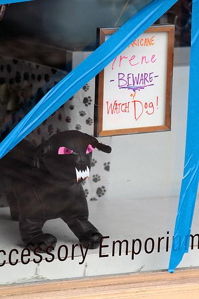 """ספא לחיות מחמד בניו יורק הציב """"כלב שמירה"""" מפני איירין בחלון הראווה (צילום: AFP)"""
