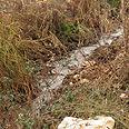 Wastewater flowing freely Photo: Tomer Pratt