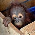'Animals have no soul' Photo: AFP