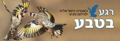 צילום:  ארז אברהם והאגודה הישראלית לצילום טבע