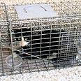 החתולים המשוטטים נלכדים ונזרקים בטירה צילום אילוסטרציה: עמותת כפר סבא אוהבת חיות