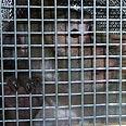 (Archives) Photo:  Animal Defenders International