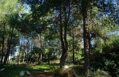 "יער בן שמן (צילום: אבי חיון, קק""ל)"