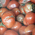 Tomatoes in Tehran market Photo: Reuters
