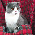 Если в доме живет кошка - ВОДОЛЕЙ, всегда нужно внимательно проверять шкафы и барабан...