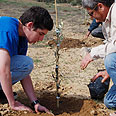 Planting a tree. Think again Photo: Peleg Havatzelet