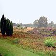 Mass grave near Bergen-Belsen Photo: AP