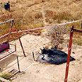 Scene of Mika Dabab's murder