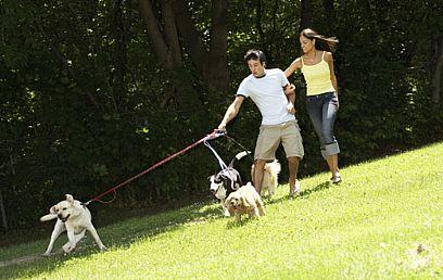 גם כלבים זקוקים לכם (צילום: ויז'ואל/פוטוס)