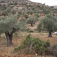 Settlers often blamed Photo: Ehud Amiton, Tazpit Unit