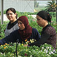 Only 27% of Israeli Arab women work (archives) Photo: Danny Ben Simhon