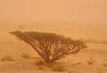 סופת חול. קו המדבר מצפין  (צילום: יגאל לאובל )