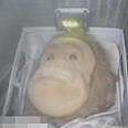 Monkey doll Iran sent into space in March Photo: Screenshot