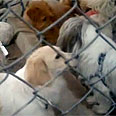 Dogs placed in quarantine