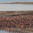 Tunick's Dead Sea photoshoot