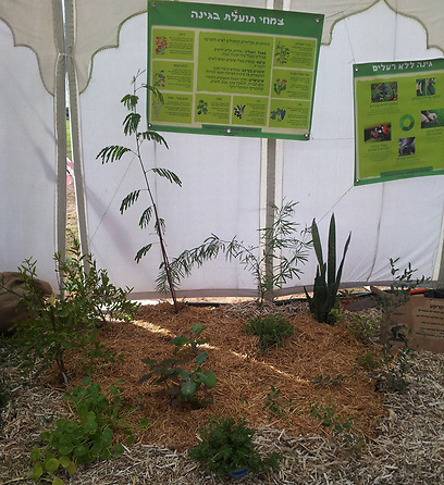 צמחים מטהרים בסביבת גידול מחופה  (צילום: שירה דושי )