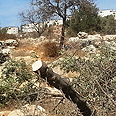 Chopped branch, documented by settlers Photo: Shomron Settlers&#39; Committee