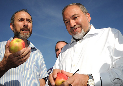 Lieberman enjoying an apple in the Golan Heights (Photo: Effi Sharir, ynet)