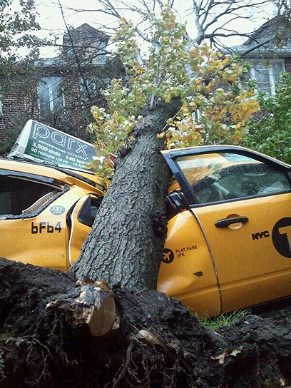 Fallen tree in New York (Photo: Yishai Sharabani)