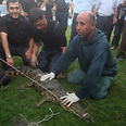 Crocodile captured in Gaza