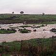 Flood in Golan Heights field