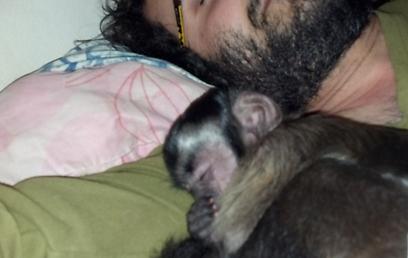 (צילום: תמר פרדמן ועופרי איתן, מקלט הקופים הישראלי)