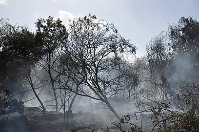 השריפה ליד כרמי יוסף (צילום: בני דויטש)