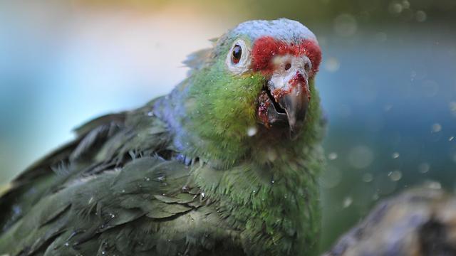 Detective parrot cracks the case (Photo: Yaron Brener/Illustration)
