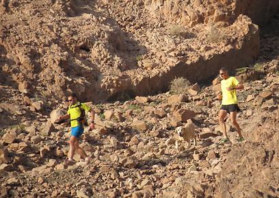 מנתר מעל הסלעים כמו פנתר. בולס בהרי אילת (צילום: דב גרינבלט)
