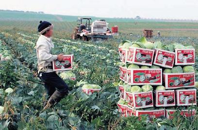 כמה ינכו הקיבוצים משכר עובדים זרים בחקלאות?