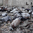 Dead animals killed in chemical arms attack Photo: Reuters