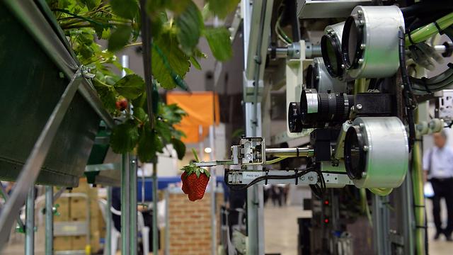 רובוט לקטיפת תותים מהתערוכה החקלאית (צילום: AFP)