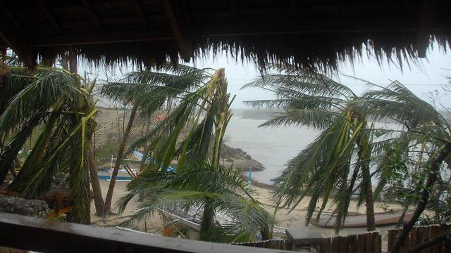 Bent palm trees in Malapascua (Photo: Dov Zingerman)