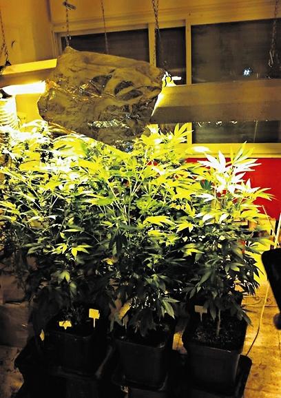 מעבדת סמים ביתית (צילום: באדיבות דוברות המשטרה)