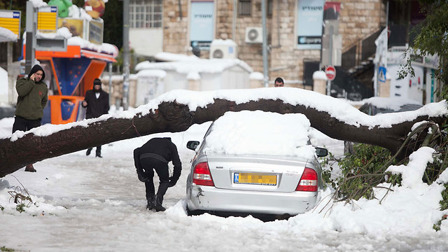 Fallen tree, Jerusalem (Photo: Ohad Zwigenberg)