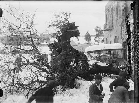 עצים התמוטטו (צילום:אריק מאטסון, ארכיון הקונגרס)