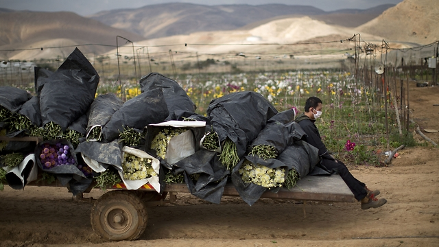 Jordan Valley agricultural settlements (Photo: AP)