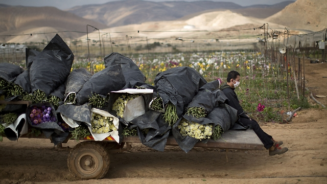 Farmers in the Jordan Valley are feeling the hurt (Photo: AP)