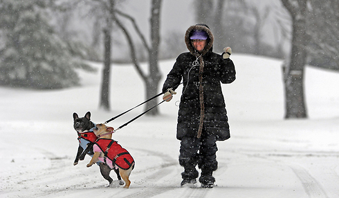 ליסה דרובקה מטיילת עם הכלבים לאוסי וסיסי בפנסילבניה (צילום: MCT)